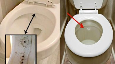 Photo of How to Clean Toilet Siphon Jets for a Stronger Flush