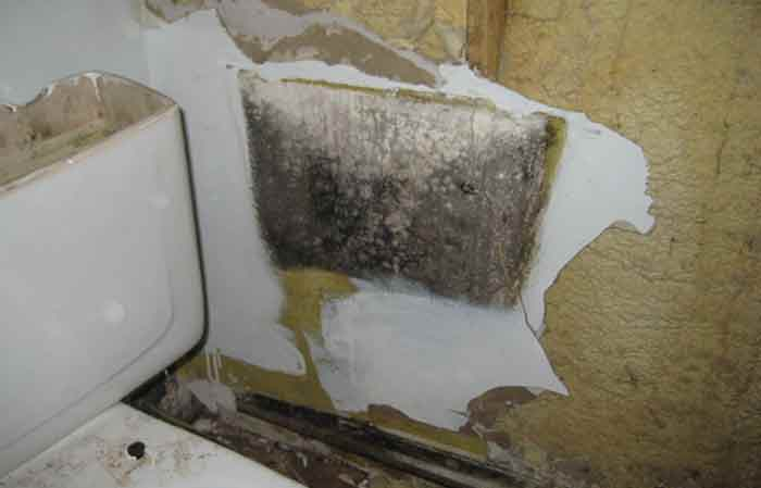 Black mold behing tank of toilet